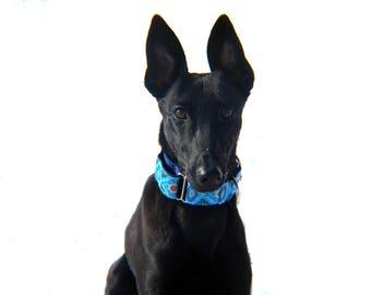 Wide 1 1/2 inch Adjustable Buckle or Martingale Dog Collar in Soren