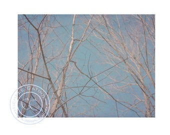 Abstract Photo, Tree Branches in Blue Turquoise Gray Sky with Light Tree Branches, Winter Scene, Autumn Trees, CT Woods