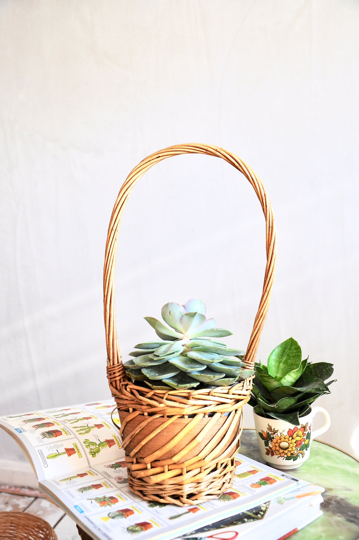 Image of Vintage plant basket with handle, succulent holder planter indoor jungle boho decor bohemian zero waste hanging planter rustic decor