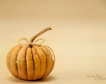 orange pumpkin-fall photography - autumn decor - autumn photo - pumpkin photo  (Original fine art photography prints) FREE Shipping