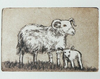 original etching of a ewe and her lamb