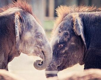 Baby Elephants Photo - 8x10 photograph - Elephant fine art print -  baby elephant - nursery art - art for twins