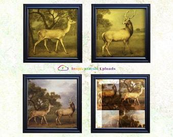 "Doe and Buck - 12"" x 12"" HD Digital Prints"