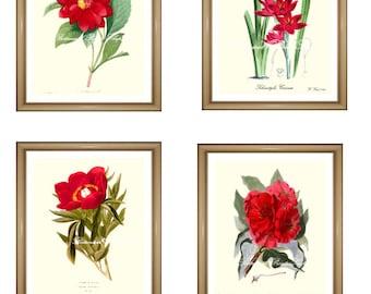 "Botanical prints Red. Red flowers print Set. Red wall art set, ANY 4 red flower prints. Red Flower print set. 5x7"" 8x10"" 11x14"""