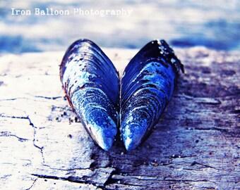 HEART SEASHELL BEACH Art Print