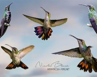 5 Hummingbird PNG, Bird Overlay, green Bird, Hummingbird Overlay, Bird Photo, Bird Photography, Composite, digital download, Photoshop, gimp