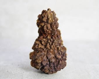 Coprolite, Rare Agatized Dinosaur Poop Fossil, Dinosaur Dung Fossil, Raw Rough Fossil, Unusual Gift for the Person Who Has Everything