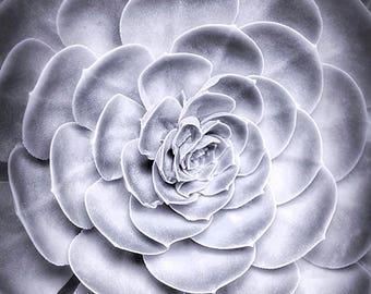Succulent Photography   Botanical Print   Black & White Nature Print   Modern Home Decor   Southwestern Wall Art   Desert Plant