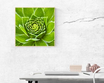 Succulents Print Succulents Clipart Succulent Leaves Cacti Printable Art Cactus Poster Cactus Photography Cacti Printable Tinta by Bulka
