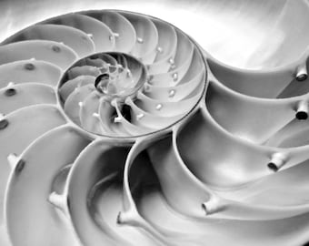 Nautilus - Original Nautilus Shell Ocean treasury Beach house decoration Summer love Ocean is calling Beach bum Fine Art Print