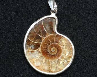 Fossil Ammonite and Sterling Silver Pendant
