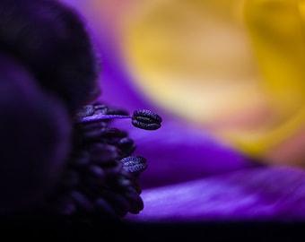 Stamen Photo, Close Up Nature, Macro Photography, Flower Close up, Fine Art Photography, purple wall art, purple photo print, flower petal