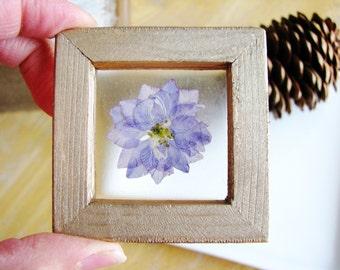 Small Flower Art, Real Plant Art, Framed Botanical Art, Magnet Art, Nature Lovers, Minimalist Decor, Wall Art, Shelf Art, Garden Gift