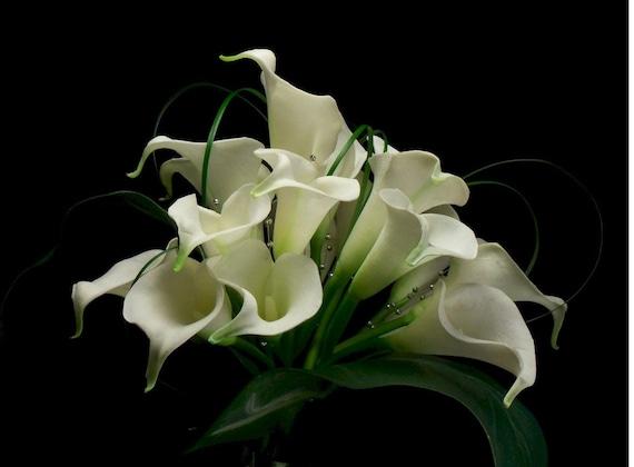 Bridal Calla Lilly Elegant Bridal Bouquet