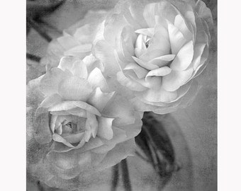 Black and White Flower Photography, Ranunculus Print, Floral Art Print, Sepia Photography, Bedroom Decor
