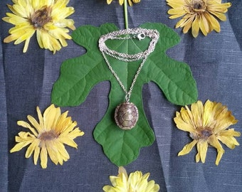 Turtle shell necklace