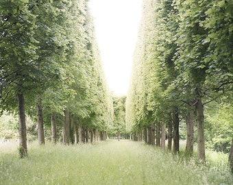 Versailles Photography - Allee of Trees, Palace of Versailles, Paris, France Travel Photography, French Country Home Decor, Large Wall Art