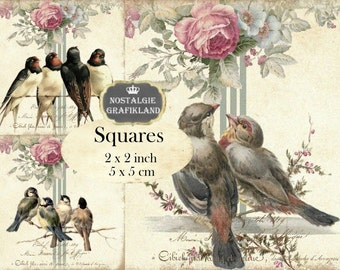 Birds Shabby Chic Squares 2x2 inch squares Instant Download digital collage sheet TW107