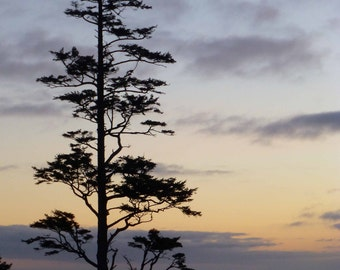 Oregon Coast Photography, Tree Silhouette, Ocean Sunset Nature Photography, Lavender Gray Peaceful Cloudy Sky Home Office Decor Gift for Him