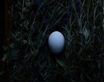 Modern dark still life of one egg in a bed of lavender