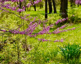 Pink Forest, Photography, Home Decor