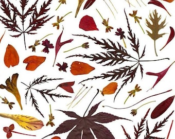 Autumn leaves and flowers in orange and red - Thanksgiving stationery - Botanical art print created from pressed flowers & leaves - Fall