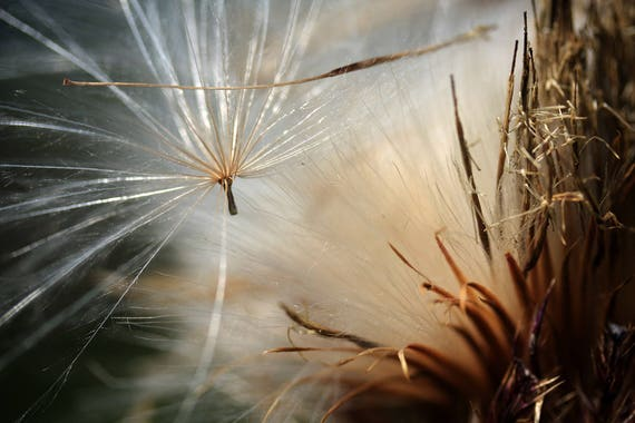 """Metal Art Print """"Escape"""", Thistle Photography Printed on a Brushed Aluminum Box, 24x16x1, SPECIAL ORDER ONLY"""