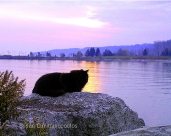 Another Day Ends, Cat at Sunset, wall art, gift 20, fine art photograph, home decor, mauve, landscape, nature