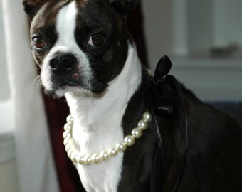 Dog Flower Girl Creme Pearl Necklace w Ribbon Tie