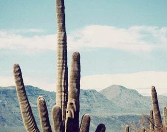 Desert Beauty - southwest photography, southwestern decor, fine art photography, desert art, cactus photograph