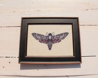 Sphinx Moth Butterfly