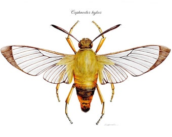 Moth illustration print
