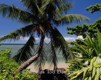 Palm Tree Beach - Hawaii - landscape - nature photo