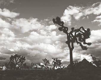 Joshua Tree black and white photo, desert wall art, landscape photography, Coachella Valley art, Joshua Tree print, dorm decor, Myan Soffia