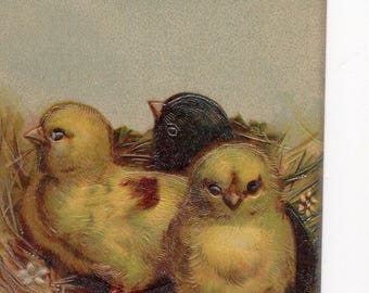 Vintage Easter postcard - Easter Greeting, Chicks in nest, 2 yellow chicks, 1 black chick, silver detail