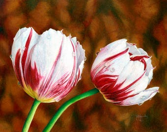 Tulips - Original Colored Pencil Drawing or Fine Art Print