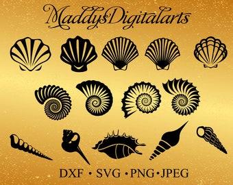 Shell SVG - Sea Shell SVG - Sea Shell Vector - Sea Shell digital clipart for Design or more, files download, png, jpg, svg, dxf