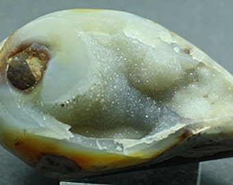 Agatized Gastropod Fossil, India - Mineral Specimen for Sale