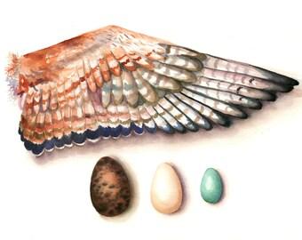 Vogel Flügel und Eiern Aquarell Druck 11 x 14, Natur-Malerei, Natur-Kunst, Home Decor Wand Kunst Vogel Aquarell, Aquarell Druck