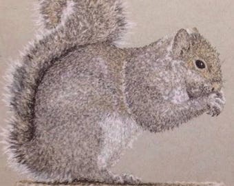 Squirrel tinted charcoal - mounted print