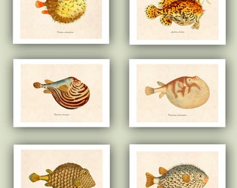 Poisson ballon tirages, créatures de la vie de mer, décoration Marine, impression d'Art nautique, décor de chalet de plage, ensemble 6 tirages 5 x 7