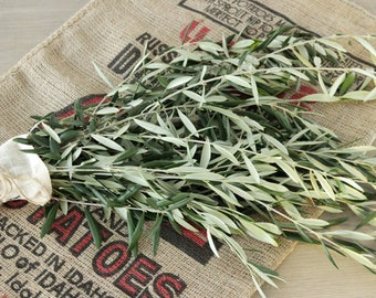 Olive Branch - 8-10 stem Fresh