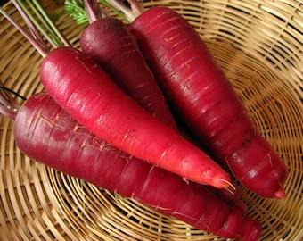 Carrot Seeds- Cosmic Purple- 200+  Seeds