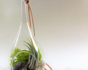 Amethyst Tear drop glass Air plant terrarim kit :unique gift; tillandsia; air plant;terrarium;office decor