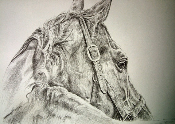 Original pencil graphite horse on water color paper