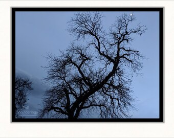 Black Tree Evening - Fine Art Print