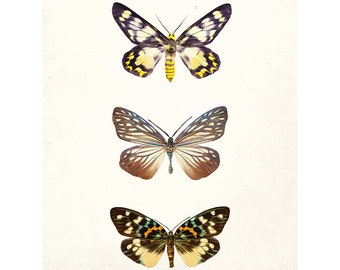 Mariposa - Butterfly Print, Nature Print, Neutral Wall Decor, Spring Garden, Modern Minimal Home Decor, Brown, Yellow, Beige