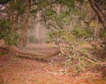 Leaning Tree Digital Background/Backdrop