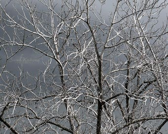 Cloudy Sky Print, Winter Tree Art, Moody Photography, Square Print, Monochromatic Wall Decor