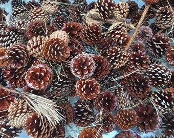 Pinecones (set of 100)
